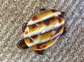 Turtle or Tortoise by Lea Stein Paris -  tortoiseshell brown striped colouring  (SOLD)